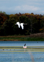 2012-10-02 Point Pelee-0952